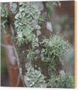 Lichens 4 Wood Print