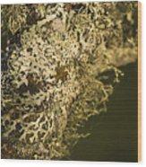 Lichens In Oregon Wood Print