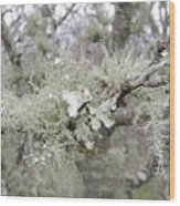 Lichens In The Plums Wood Print