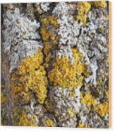 Lichens On Tree Bark Wood Print