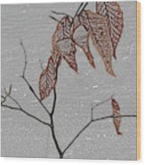 Life Is A Beech Wood Print