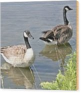 Life Is Good For Canadian Geese Wood Print