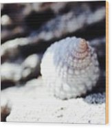 Life Of A Shell In Eleuthera Wood Print