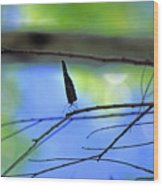 Life On The Edge Wood Print