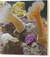 Life Under The Sea In Monterey Aquarium-california Wood Print