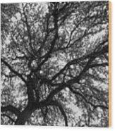 Lifeline Wood Print