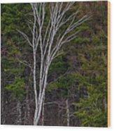 Life's A Birch No.1 Wood Print