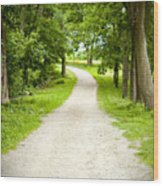 Life's Path Wood Print