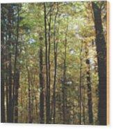 Light Among The Trees Vertical Wood Print