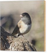 Light And Dark Of A Junco Wood Print