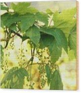 Light And Leafy Wood Print