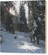 Light And Shadow On A Snowy Landscape Wood Print