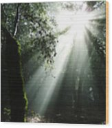 Light Angel Wood Print