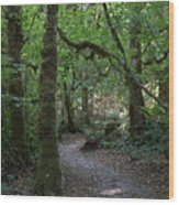 Light At The End Of The Path Wood Print