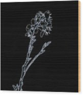 Light Blue Blooming Branch In Prayer Wood Print