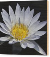 Light Blue Water Lily Wood Print