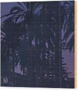 Light Decorated Palm Trees On Paseo Maritimo Wood Print