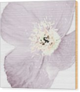 Light Dusty Lavender Poppy Wood Print