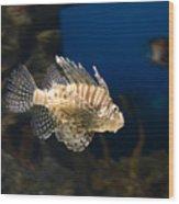 Light Fish Wood Print