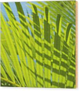 Light Green Palm Leaves Wood Print