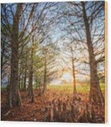 Light In The Cypress Trees II Wood Print