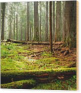 Light In The Forest Wood Print by Idaho Scenic Images Linda Lantzy