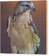 Light Morph Immature Swainsons Hawk Wood Print