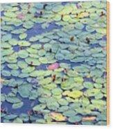 Light On Lily Pads Wood Print
