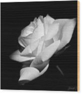 Light On Rose Black And White Wood Print