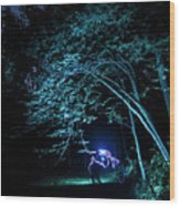 Light Painted Arched Tree  Wood Print