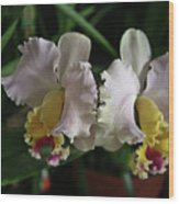 Light Pink And Yellow Orchid Wood Print