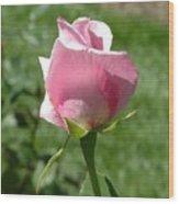 Light Pink Rose Close-up Wood Print