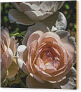 Light Pink Roses Wood Print