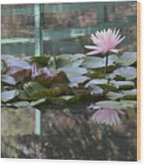 Light Pink Water Lily Wood Print