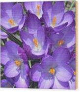 Light Purple Wood Print