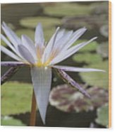 Light Purple Lily Wood Print