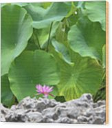 Light Purple Water Lily And Large Green Leaves Wood Print