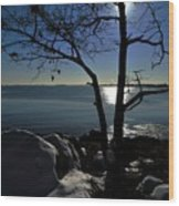 Light Snow And Stillness Wood Print