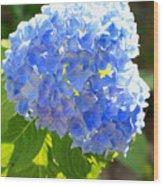 Light Through Blue Hydrangeas Wood Print