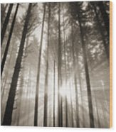Light Through Forest Wood Print
