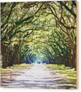 Light Through Live Oak Lane Wood Print