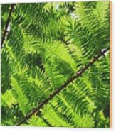 Light Through The Green Wood Print