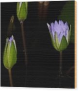 Light Violet Lilies Wood Print