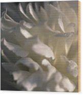 Light Wet Flower Wood Print