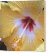 Light Yellow Hybiscus Wood Print
