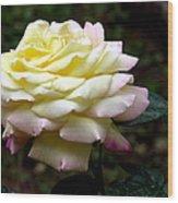 Light Yellow Rose 2 Wood Print