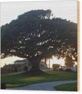 Lighthouse Tree 0556 Wood Print