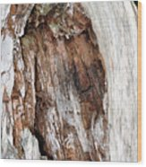 Lightning Damage In An Old Cypress Tree Wood Print