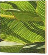 Lightplay Through The Leaves 3 Wood Print