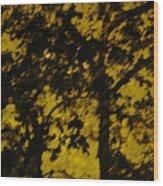 Lighttthru Forest Wood Print